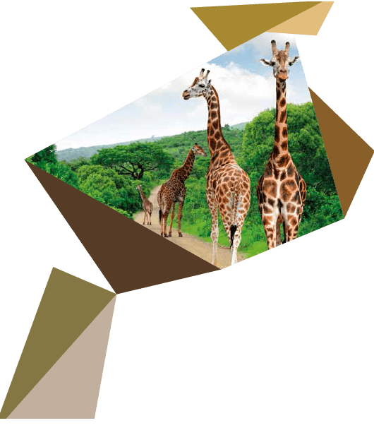 Geometric shapes with colours and a section of a photo of giraffes in the wild